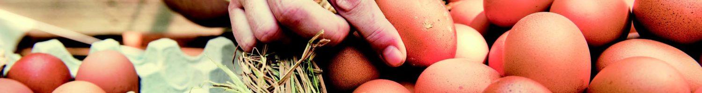 Om te delen - eieren